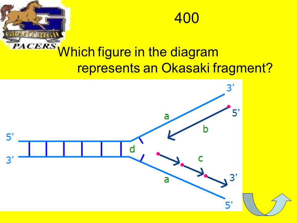 400 Which figure in the diagram represents an Okasaki fragment