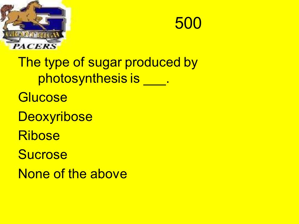 500 The type of sugar produced by photosynthesis is ___.