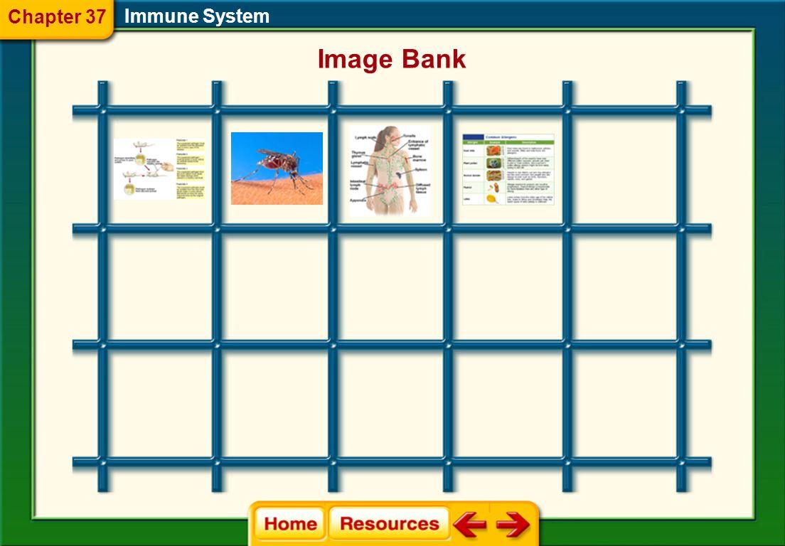 Chapter 37 Glencoe Biology Transparencies Immune System