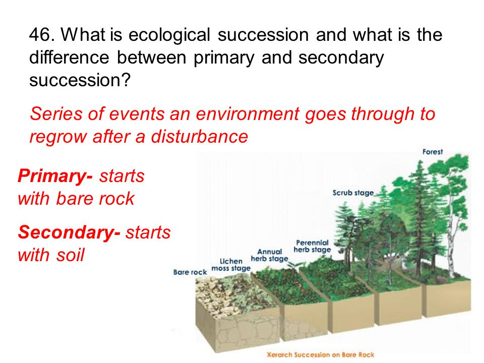 Series of events an environment goes through to regrow after a disturbance Primary- starts with bare rock Secondary- starts with soil