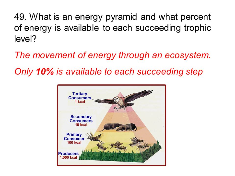 The movement of energy through an ecosystem. Only 10% is available to each succeeding step