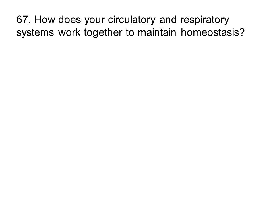 67. How does your circulatory and respiratory systems work together to maintain homeostasis?