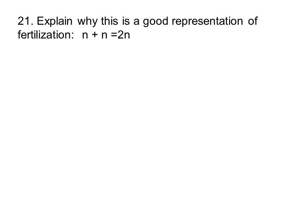 21. Explain why this is a good representation of fertilization: n + n =2n