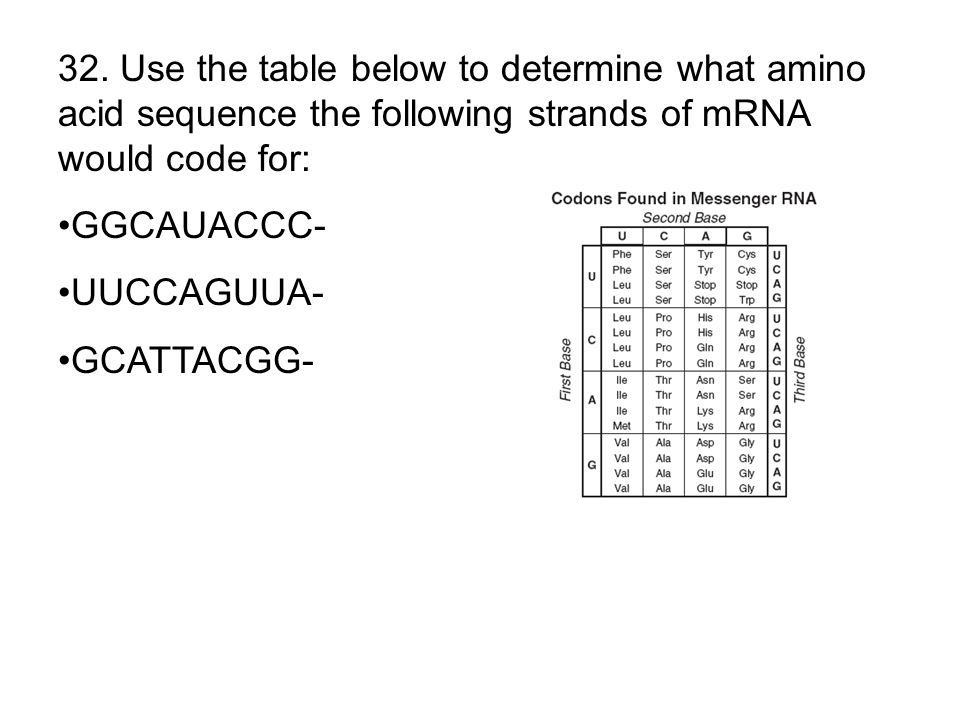 32. Use the table below to determine what amino acid sequence the following strands of mRNA would code for: GGCAUACCC- UUCCAGUUA- GCATTACGG-