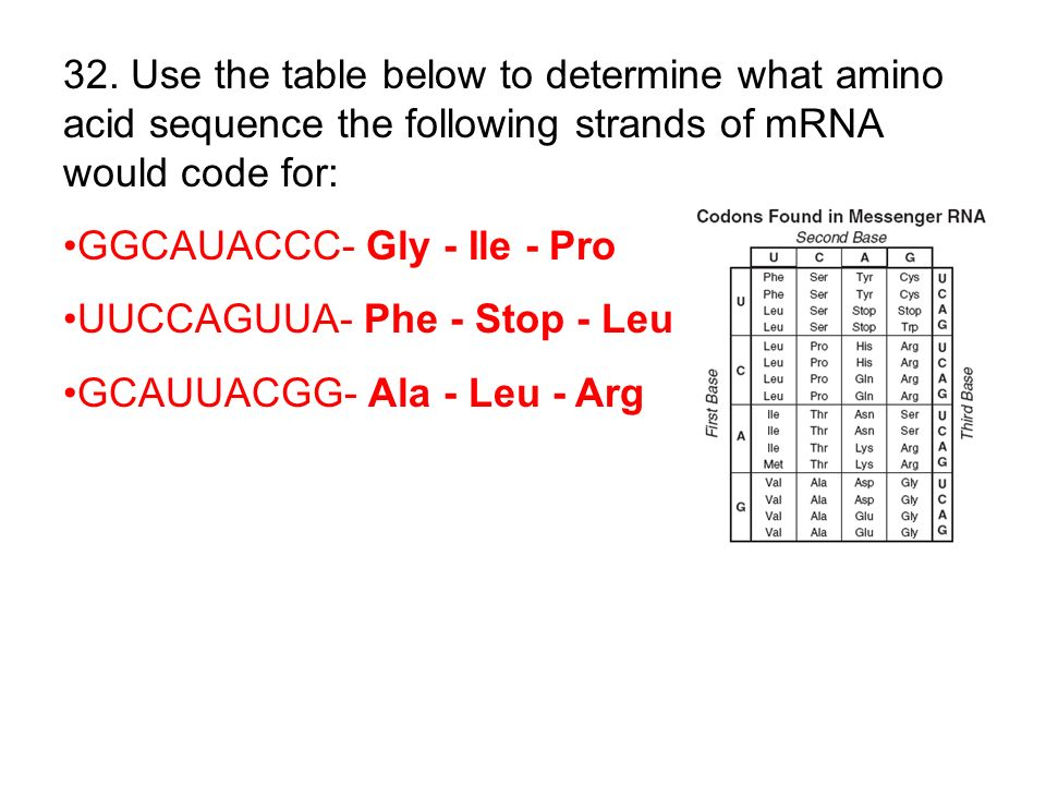 32. Use the table below to determine what amino acid sequence the following strands of mRNA would code for: GGCAUACCC- Gly - Ile - Pro UUCCAGUUA- Phe