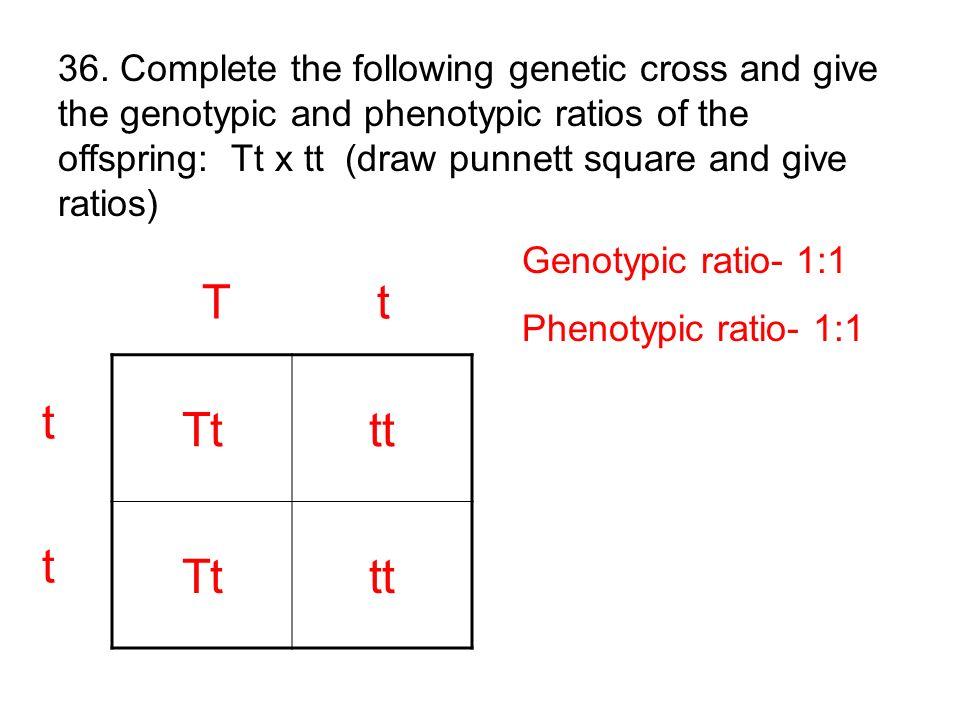 Tttt Tttt T t t tt t Genotypic ratio- 1:1 Phenotypic ratio- 1:1