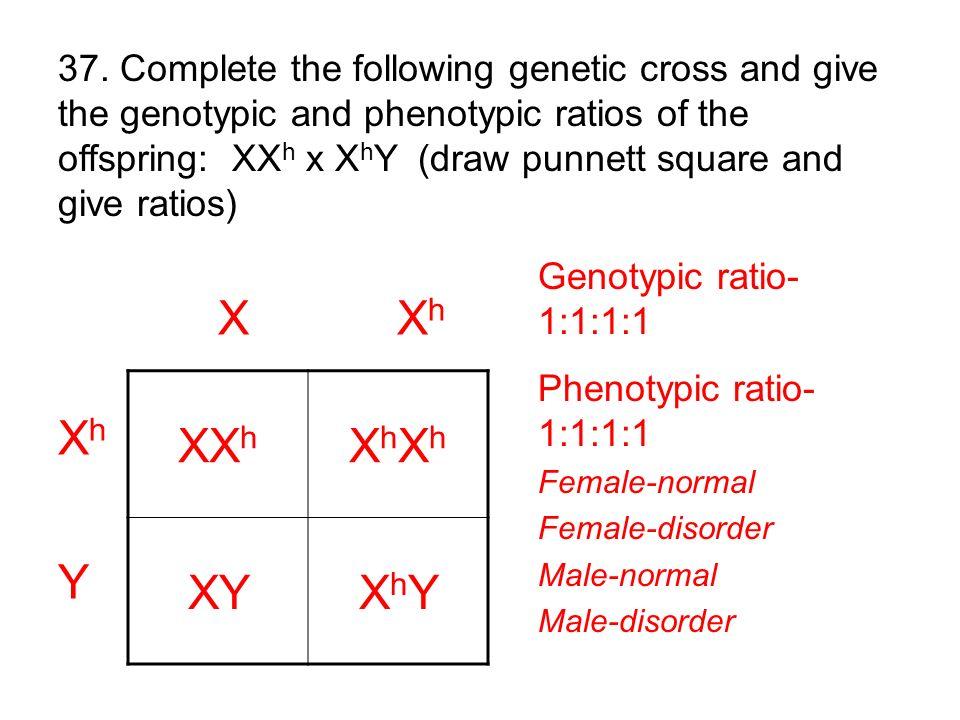 XX h XhXhXhXh XYXhYXhY X X h Xh YXh Y Genotypic ratio- 1:1:1:1 Phenotypic ratio- 1:1:1:1 Female-normal Female-disorder Male-normal Male-disorder