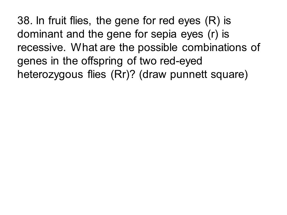 38. In fruit flies, the gene for red eyes (R) is dominant and the gene for sepia eyes (r) is recessive. What are the possible combinations of genes in