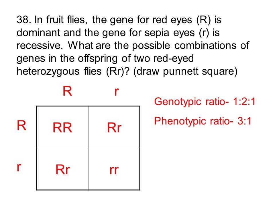 RRRr rr R r R rR r Genotypic ratio- 1:2:1 Phenotypic ratio- 3:1