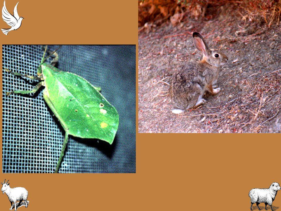 Survival Behavior How to Avoid Being Eaten –Predator animals eat prey animals.