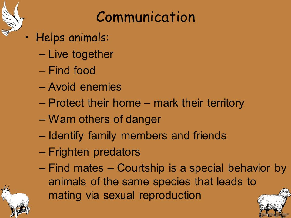 13.3 Living Together Most animals interact with their same species Social behavior – is the term used for interactions between animals of the same species.