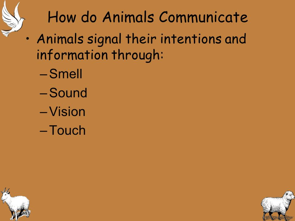 Communication Helps animals: –Live together –Find food –Avoid enemies –Protect their home – mark their territory –Warn others of danger –Identify family members and friends –Frighten predators –Find mates – Courtship is a special behavior by animals of the same species that leads to mating via sexual reproduction