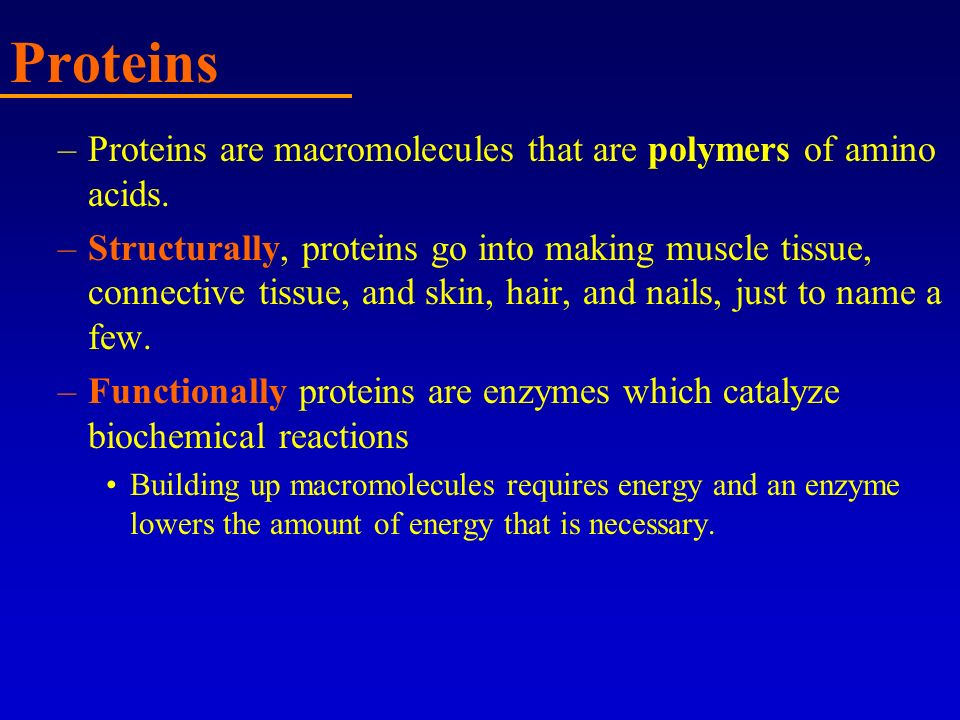 Proteins –Proteins are macromolecules that are polymers of amino acids. –Structurally, proteins go into making muscle tissue, connective tissue, and s