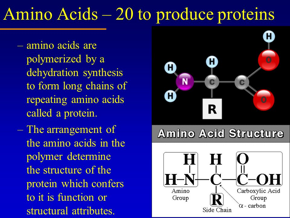 Amino Acids – 20 to produce proteins –amino acids are polymerized by a dehydration synthesis to form long chains of repeating amino acids called a pro