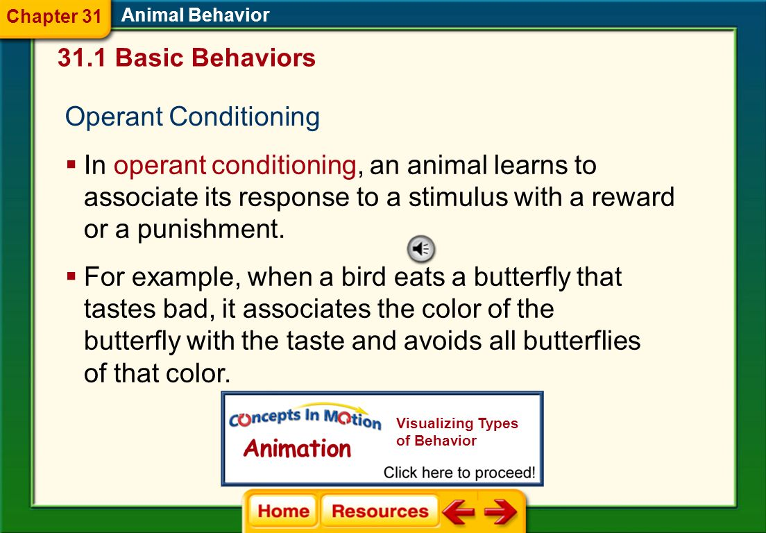Classical Conditioning Classical conditioning occurs when an association is made between two different kinds of stimuli. Animal Behavior 31.1 Basic Be