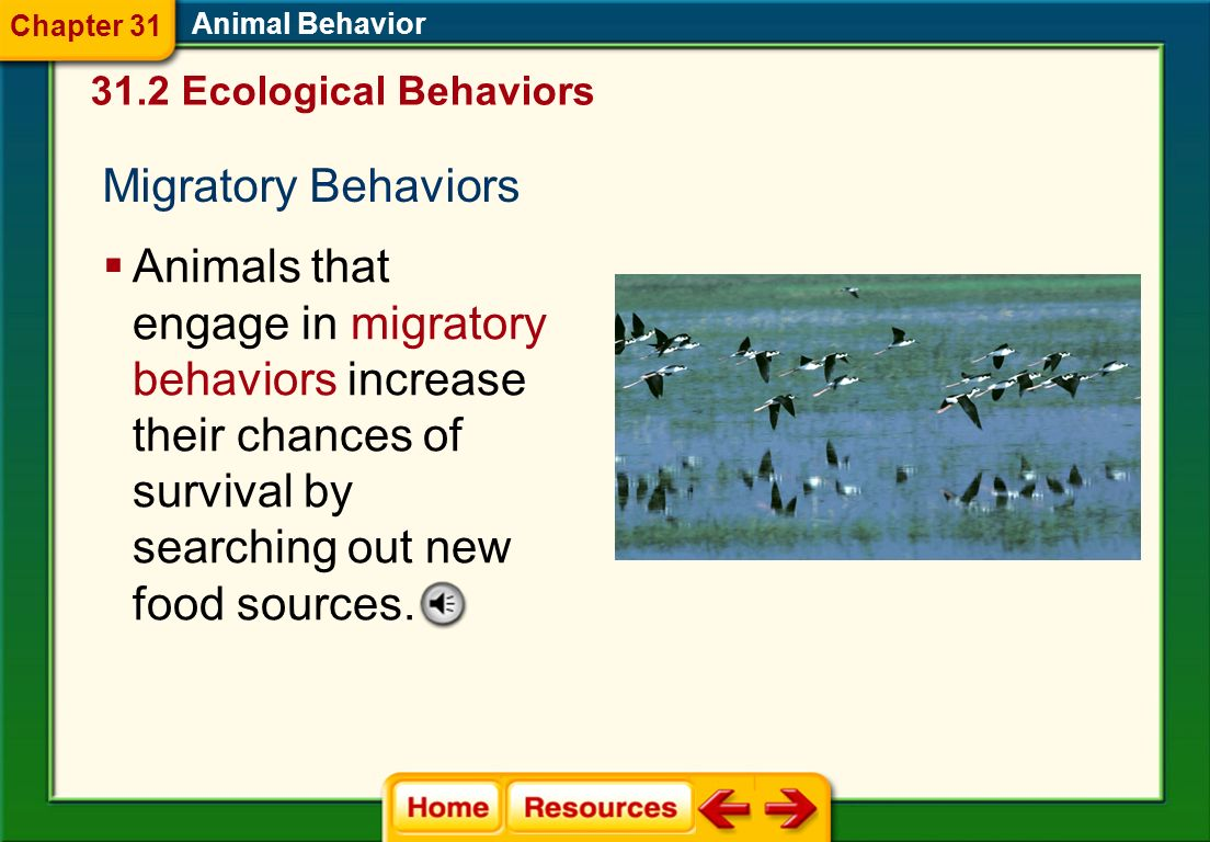 Foraging Behaviors Foraging successfully means obtaining needed nutrients, while avoiding predators and poisonous foods. Animal Behavior Natural selec