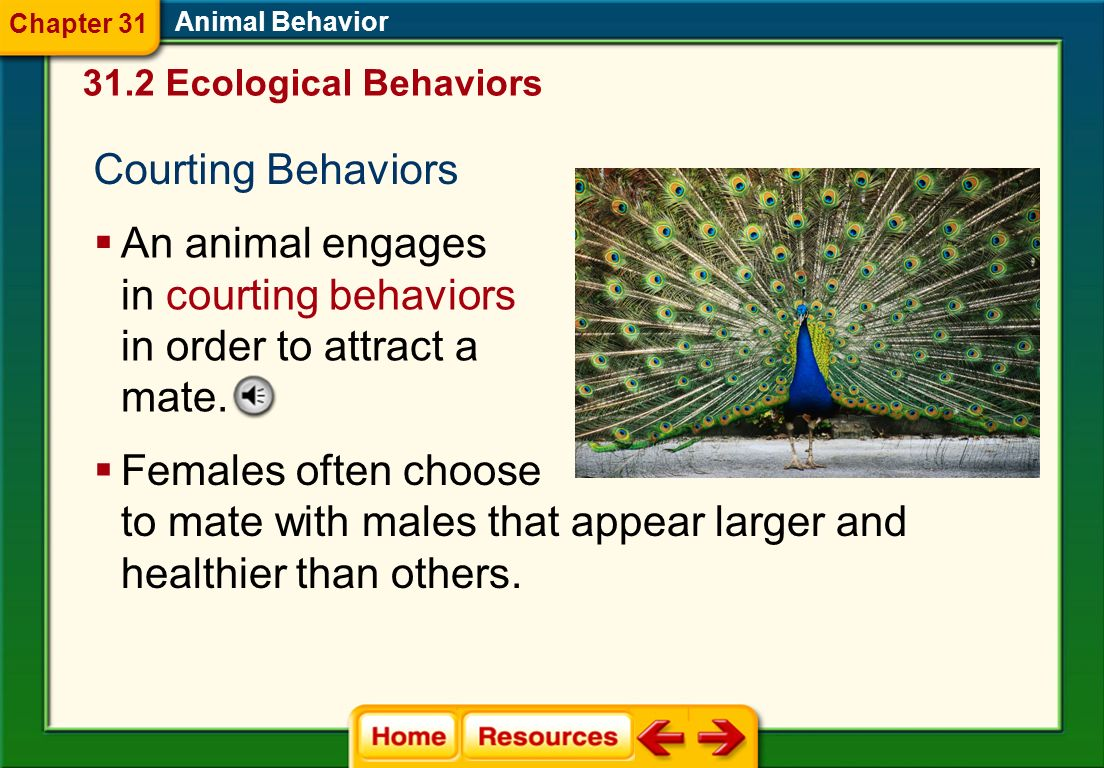 Auditory Communication Howls, hoots, barks, and chirps are just a few examples of auditory communication. Animal Behavior Language is a form of audito