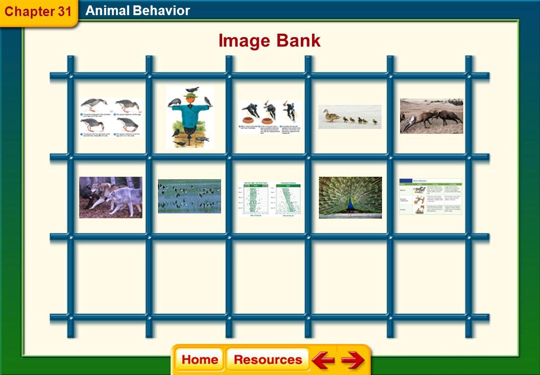 Glencoe Biology Transparencies Animal Behavior Chapter 31