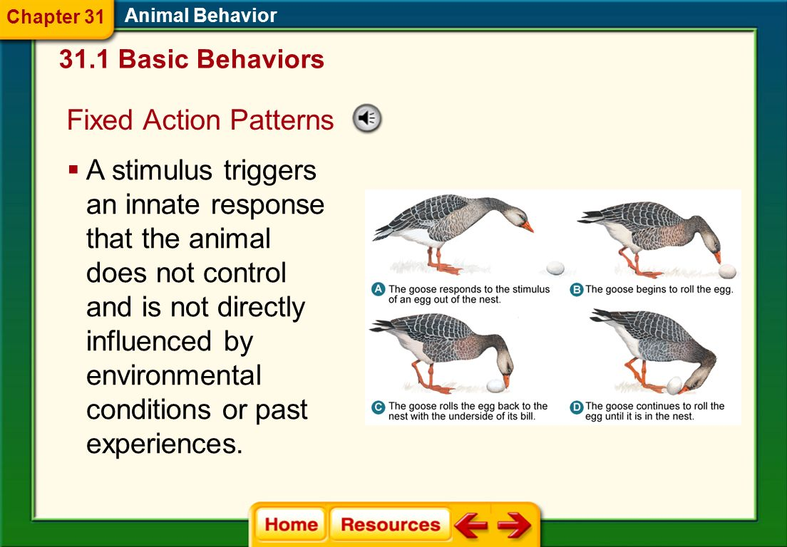 Innate Behavior Behaviors are referred to as innate when the same behavior commonly is observed among a large number of individuals within a populatio