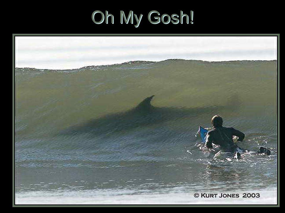 Oh My Gosh!