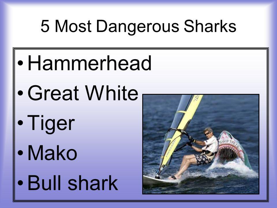 5 Most Dangerous Sharks Hammerhead Great White Tiger Mako Bull shark