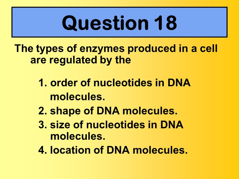 The types of enzymes produced in a cell are regulated by the 1.order of nucleotides in DNA molecules. 2. shape of DNA molecules. 3. size of nucleotide