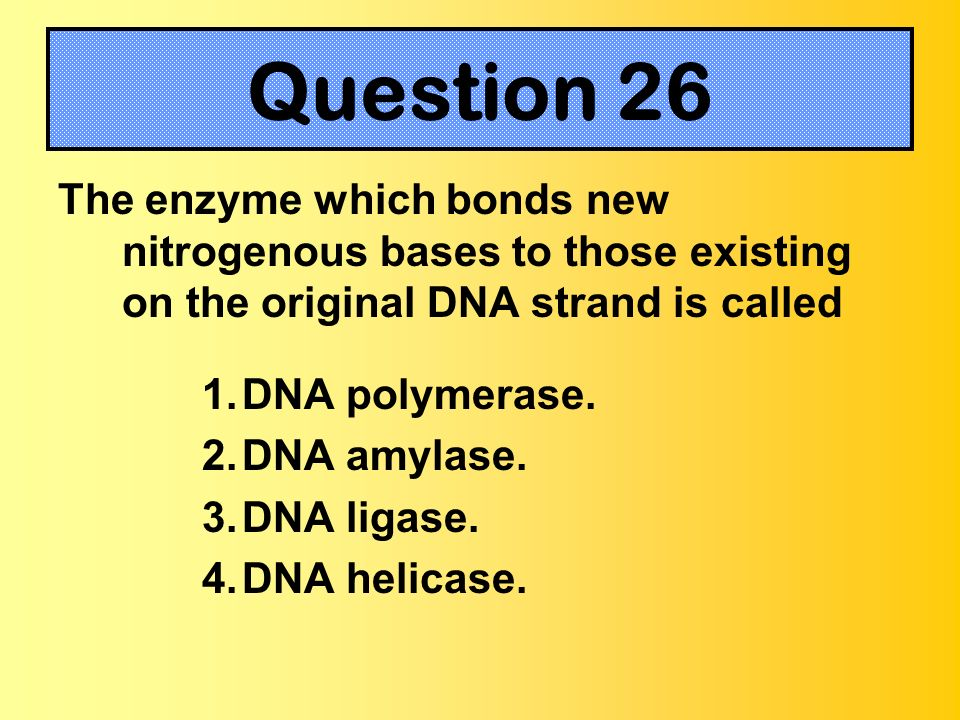 The enzyme which bonds new nitrogenous bases to those existing on the original DNA strand is called 1.DNA polymerase. 2.DNA amylase. 3.DNA ligase. 4.D