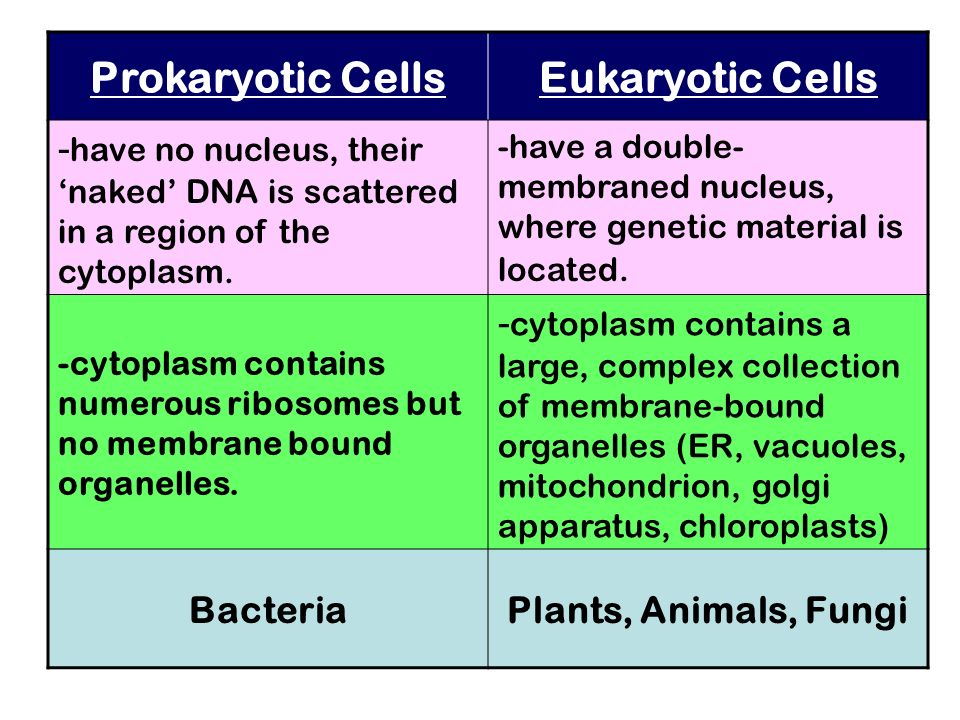 Prokaryotic CellsEukaryotic Cells - have no nucleus, their naked DNA is scattered in a region of the cytoplasm. -have a double- membraned nucleus, whe