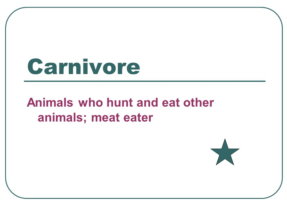 Omnivore An organism that eats both plants and animals