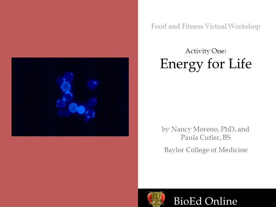 BioEd Online Food and Fitness Virtual Workshop Activity One: Energy for Life by Nancy Moreno, PhD, and Paula Cutler, BS Baylor College of Medicine