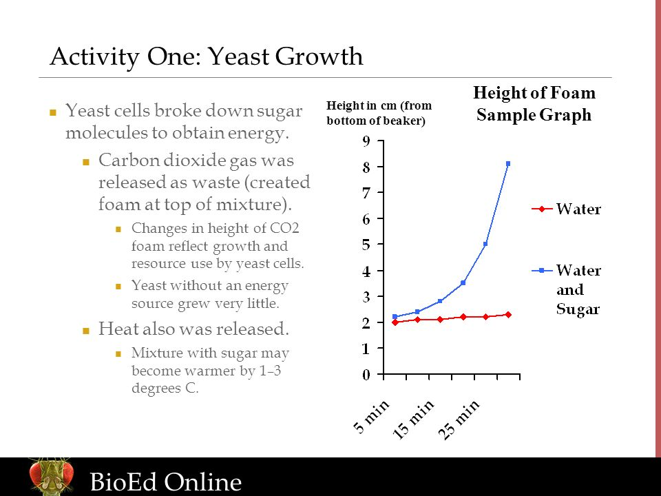 www.BioEdOnline.org BioEd Online Height in cm (from bottom of beaker) Height of Foam Sample Graph Activity One: Yeast Growth Yeast cells broke down sugar molecules to obtain energy.