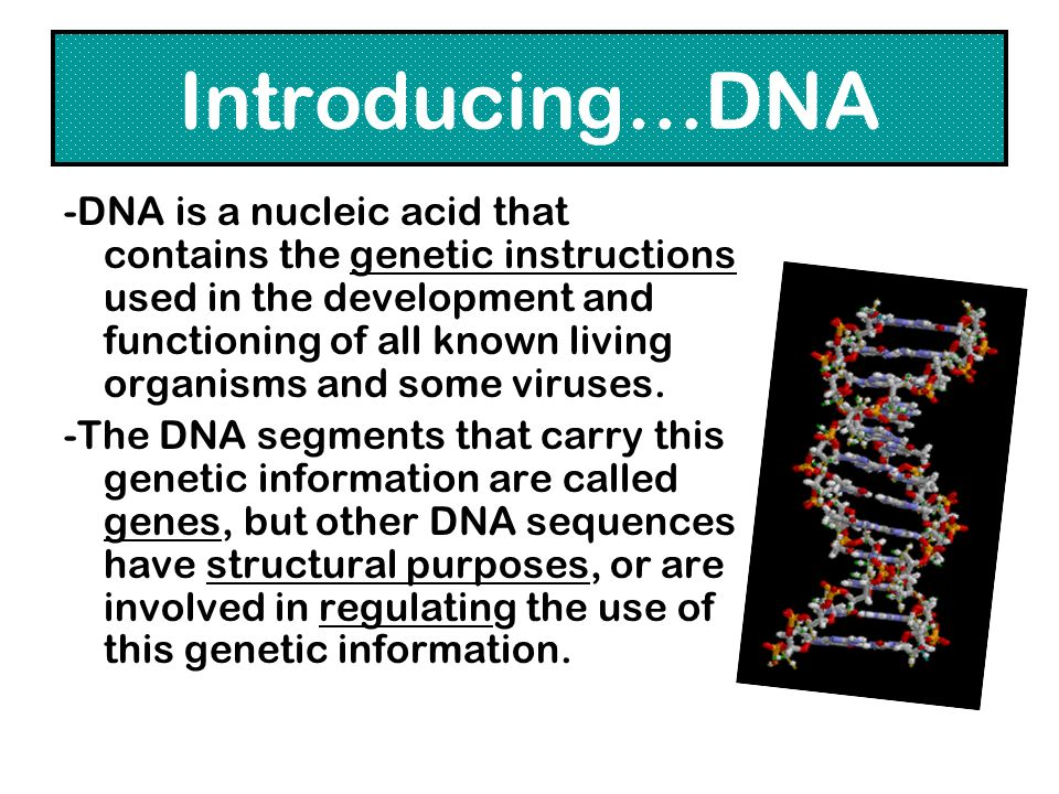 Introducing…DNA -DNA is a nucleic acid that contains the genetic instructions used in the development and functioning of all known living organisms an