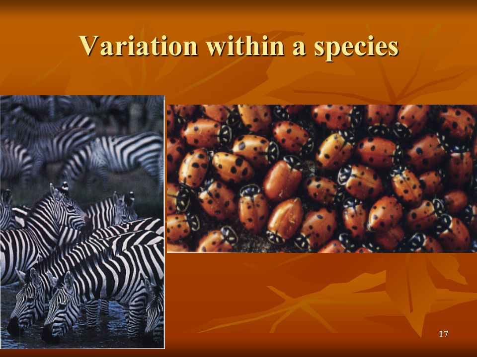 17 Variation within a species