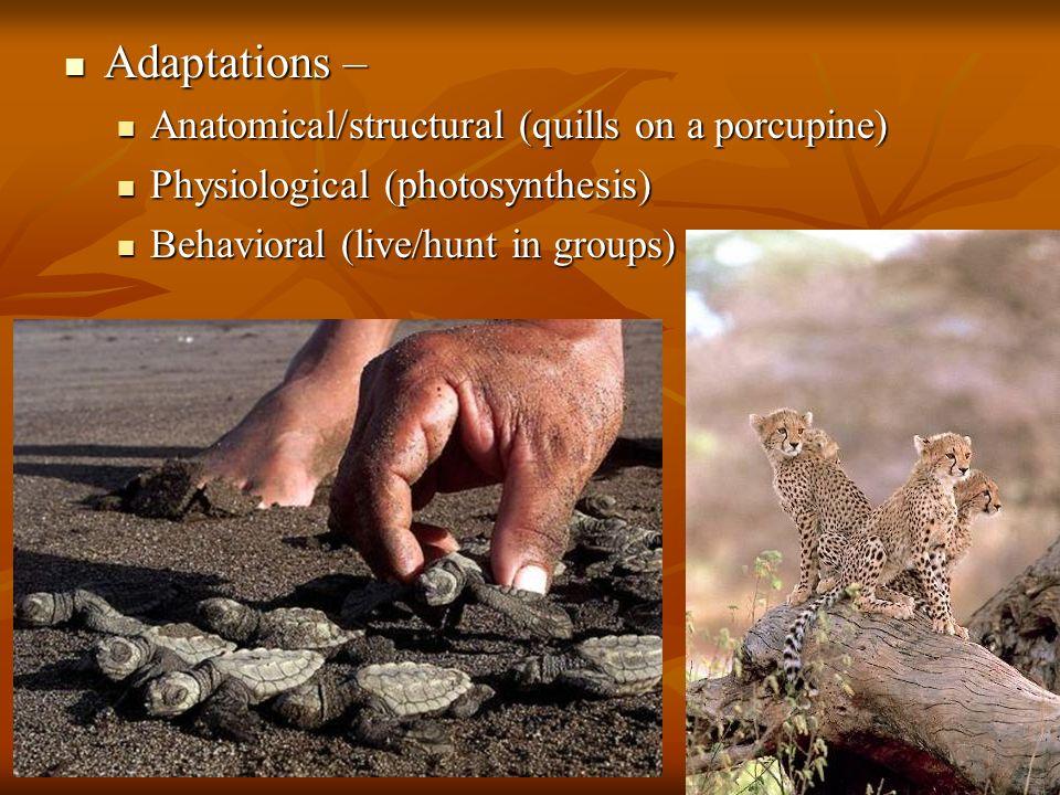 23 Adaptations – Adaptations – Anatomical/structural (quills on a porcupine) Anatomical/structural (quills on a porcupine) Physiological (photosynthes