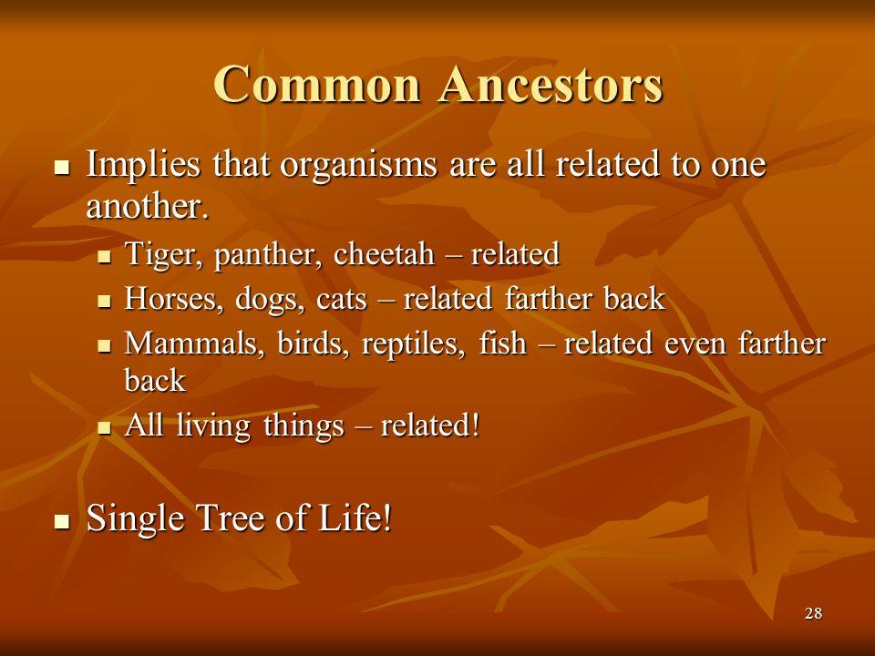 28 Common Ancestors Implies that organisms are all related to one another. Implies that organisms are all related to one another. Tiger, panther, chee