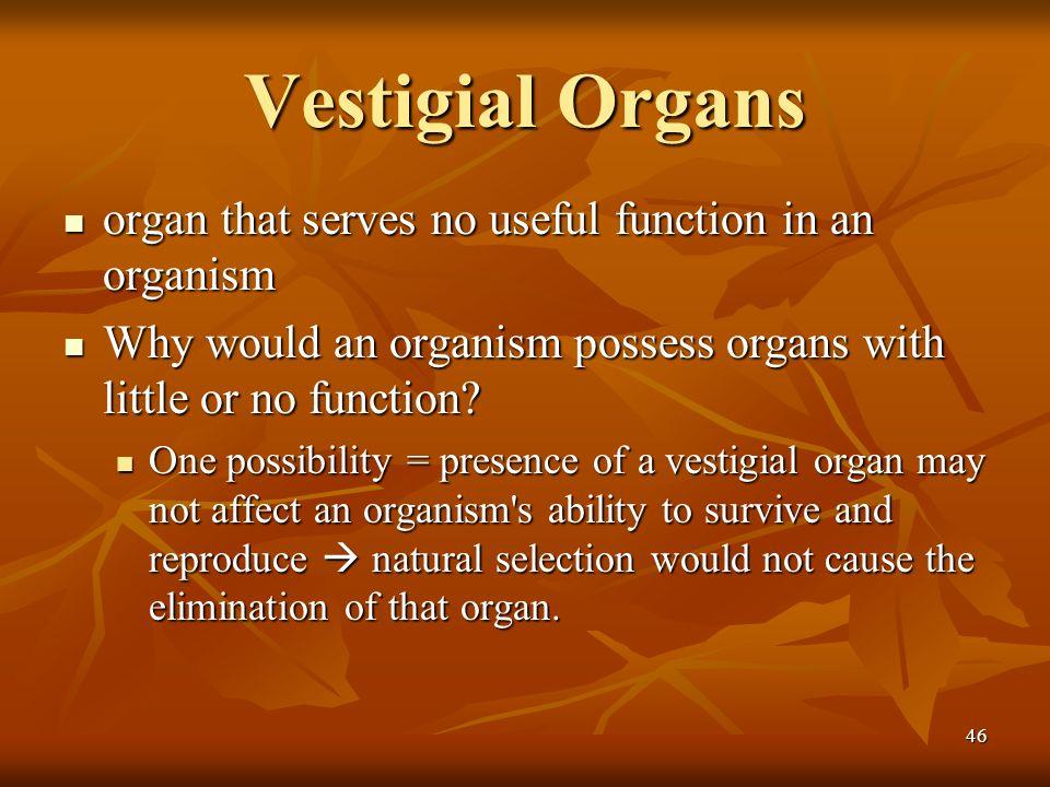 46 Vestigial Organs organ that serves no useful function in an organism organ that serves no useful function in an organism Why would an organism poss