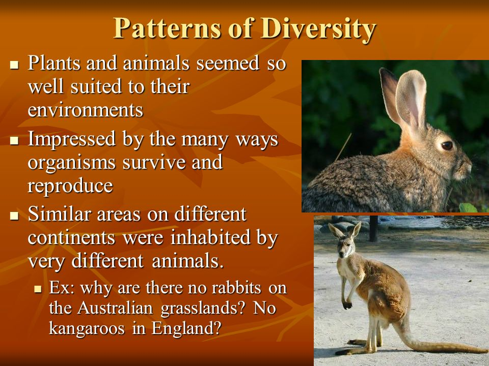 6 Patterns of Diversity Plants and animals seemed so well suited to their environments Plants and animals seemed so well suited to their environments