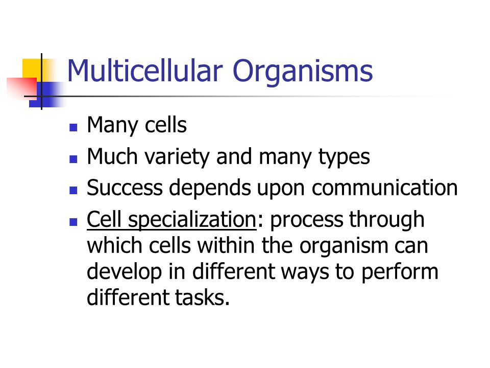 Multicellular Organisms Many cells Much variety and many types Success depends upon communication Cell specialization: process through which cells within the organism can develop in different ways to perform different tasks.
