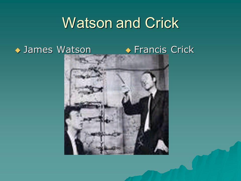 Watson and Crick James Watson James Watson Francis Crick Francis Crick