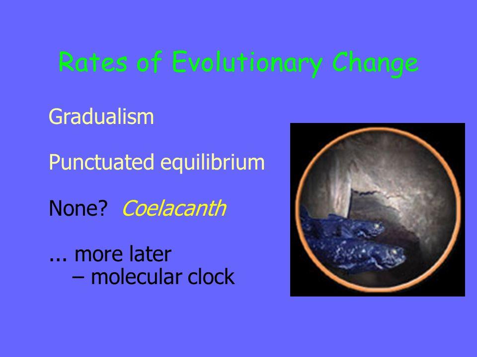 Rates of Evolutionary Change Gradualism Punctuated equilibrium None.