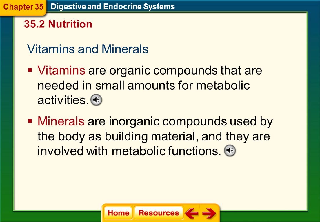 Digestive and Endocrine Systems Food Pyramid 35.2 Nutrition Chapter 35