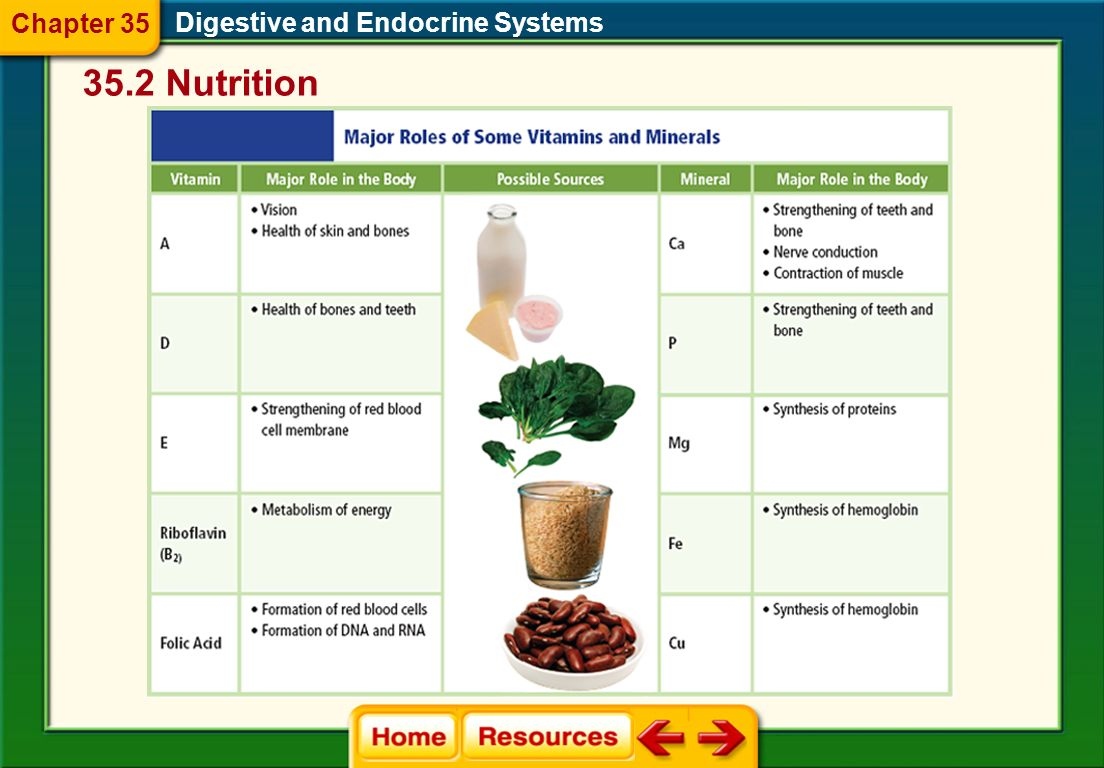 Digestive and Endocrine Systems Vitamins and Minerals Vitamins are organic compounds that are needed in small amounts for metabolic activities.