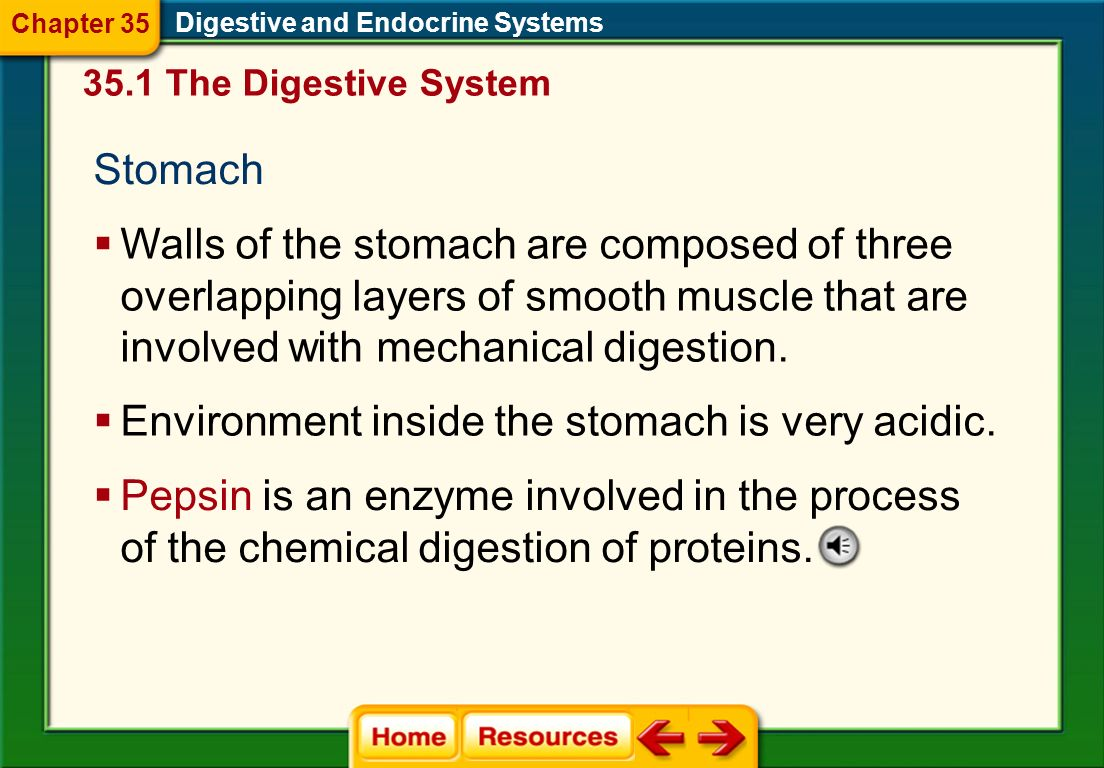 Digestive and Endocrine Systems Chapter 35