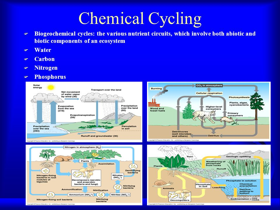 Chemical Cycling F Biogeochemical cycles: the various nutrient circuits, which involve both abiotic and biotic components of an ecosystem F Water F Ca