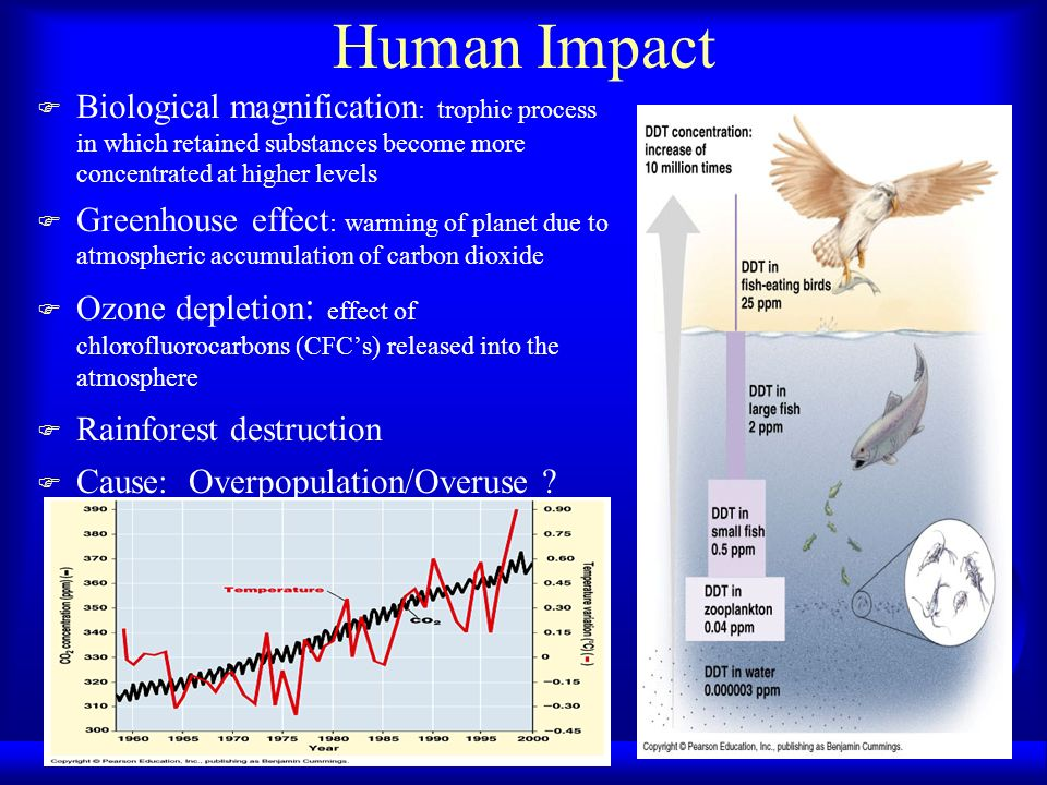 Human Impact F Biological magnification : trophic process in which retained substances become more concentrated at higher levels F Greenhouse effect :