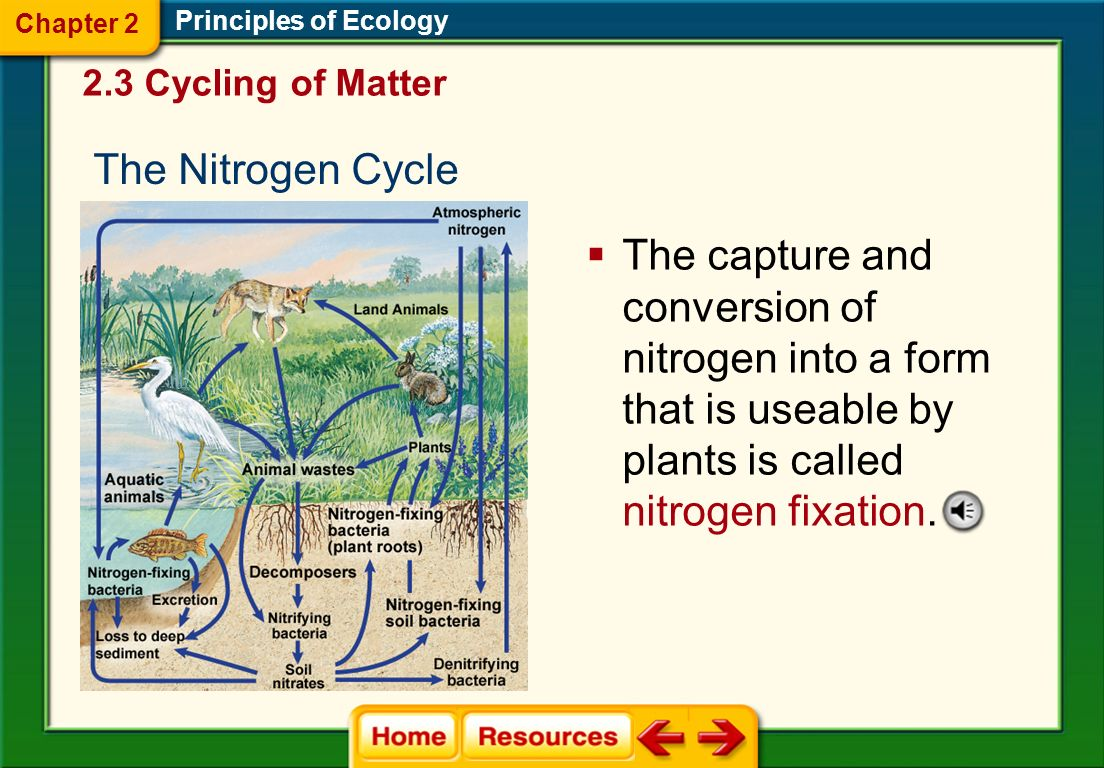 Principles of Ecology Long-term Cycle Organic matter converted to peat, coal, oil, or gas deposits (carbon) Calcium carbonate (carbon and oxygen) Shor