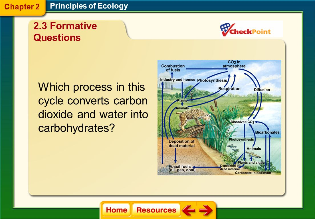 A. carbon cycle B. nitrogen cycle C. phosphorus cycle D. water cycle Principles of Ecology Which biogeochemical cycle involves evaporation, transpirat