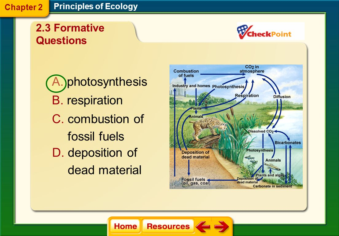 Principles of Ecology Chapter 2 2.3 Formative Questions Which process in this cycle converts carbon dioxide and water into carbohydrates?