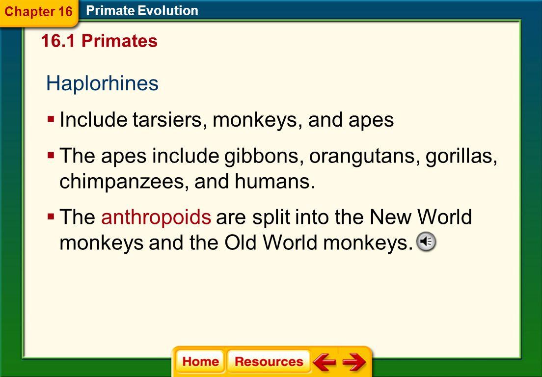Primate Evolution Chapter 16