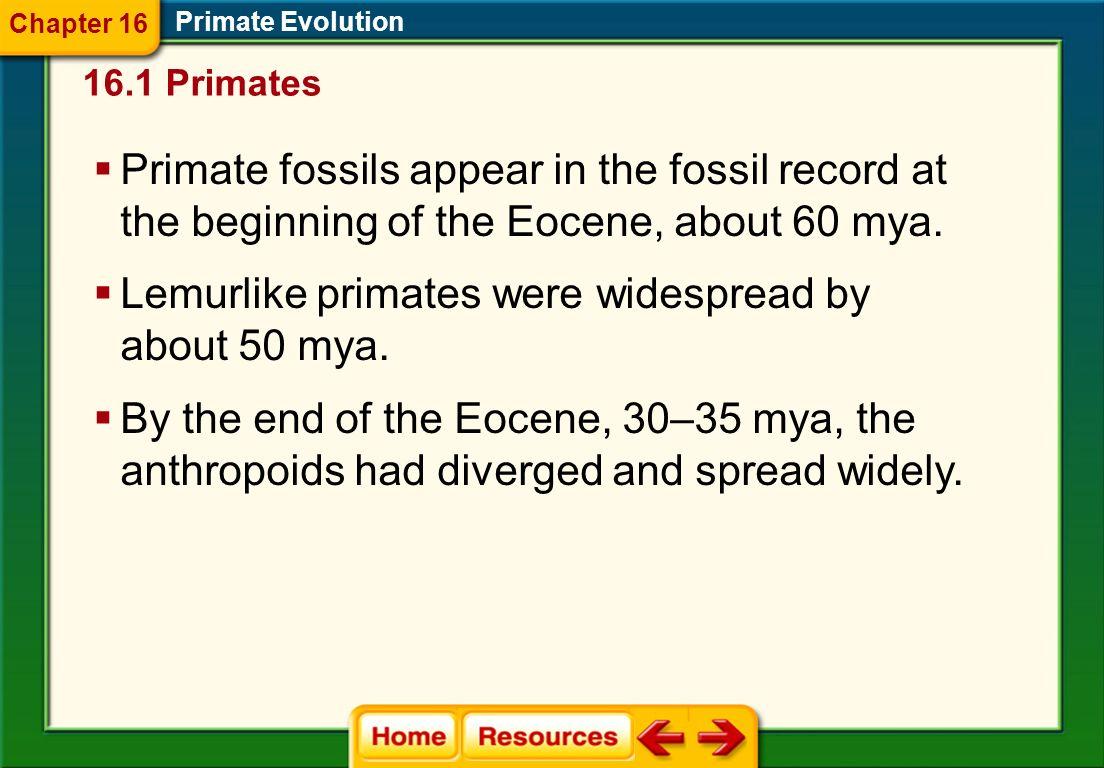 Primate Evolution 16.1 Primates Chapter 16